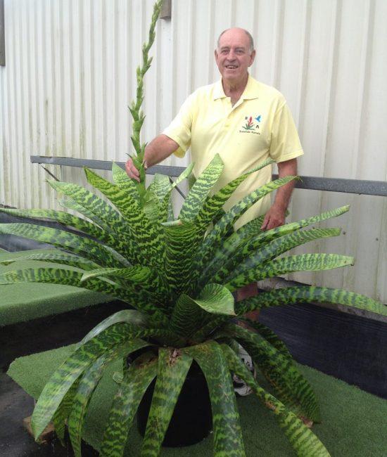 About Apex Plants