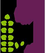 Apex Plants Bromeliads Australia